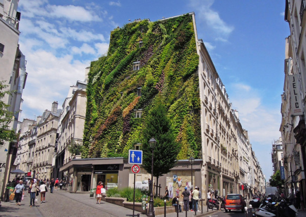 Oasis of Aboukir Vertical Garden Patrick Blanc