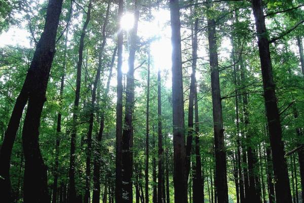 trees-600x429