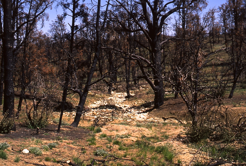 Piru-Creek-basin-drought-fire