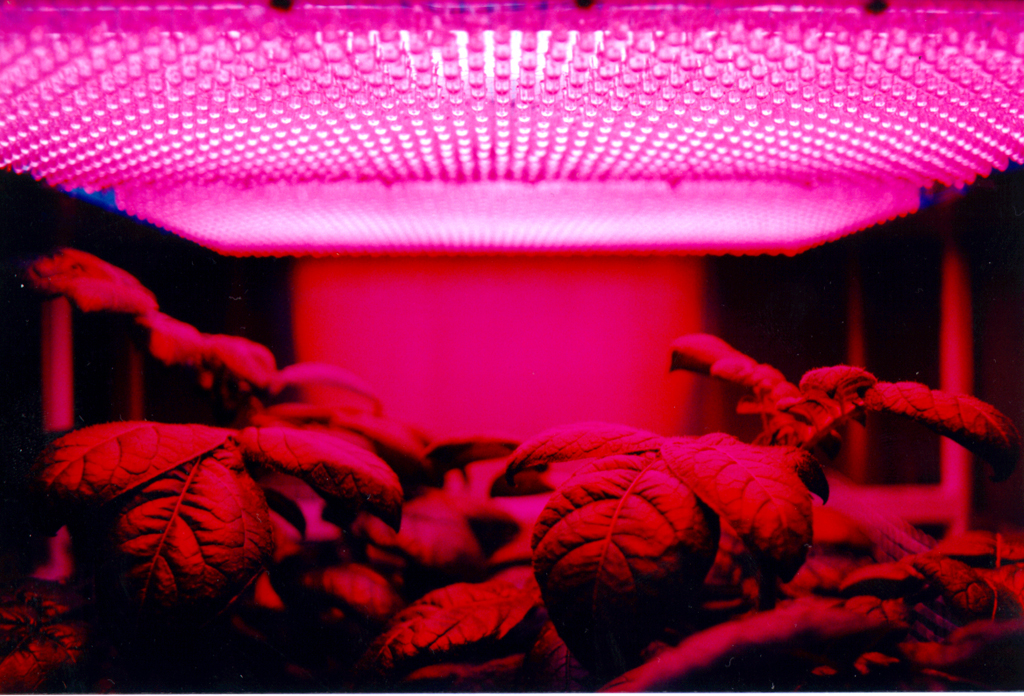 Plants growing indoors under LEDs