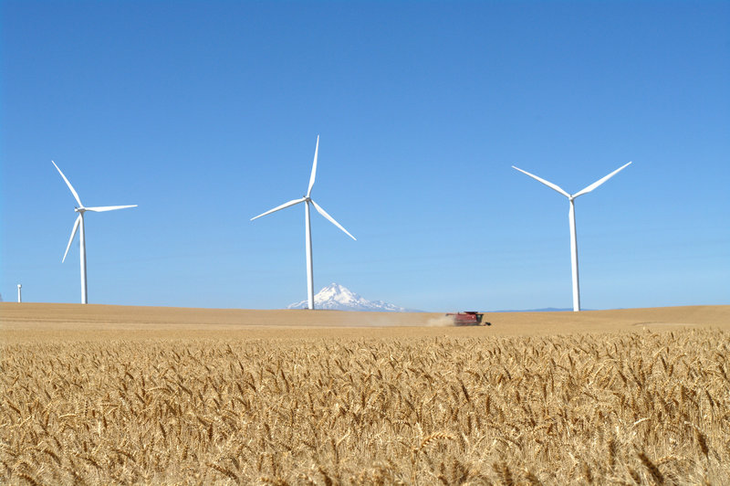 rsz_turbines_field