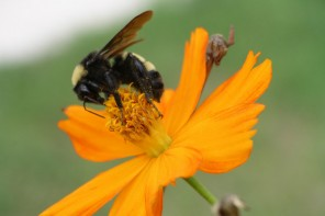 Pollen Batteries: Nothing To Sneeze At